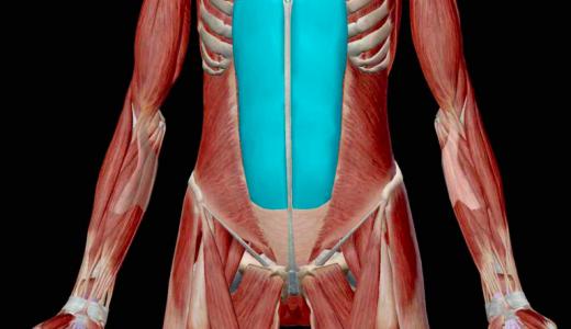 腰を反らすと痛いときは腹筋が原因?鍼灸師が教える腰痛とっておき改善策